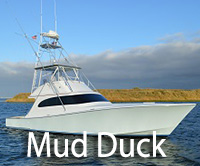 Mud Duck